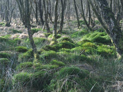 Inventaire-cartographie de la végétation sur 3 Espaces Naturels Sensible à Paimpont (35) : Etang de l'Abbaye, Tourbières du Pâtis Vert et de l'Abbaye