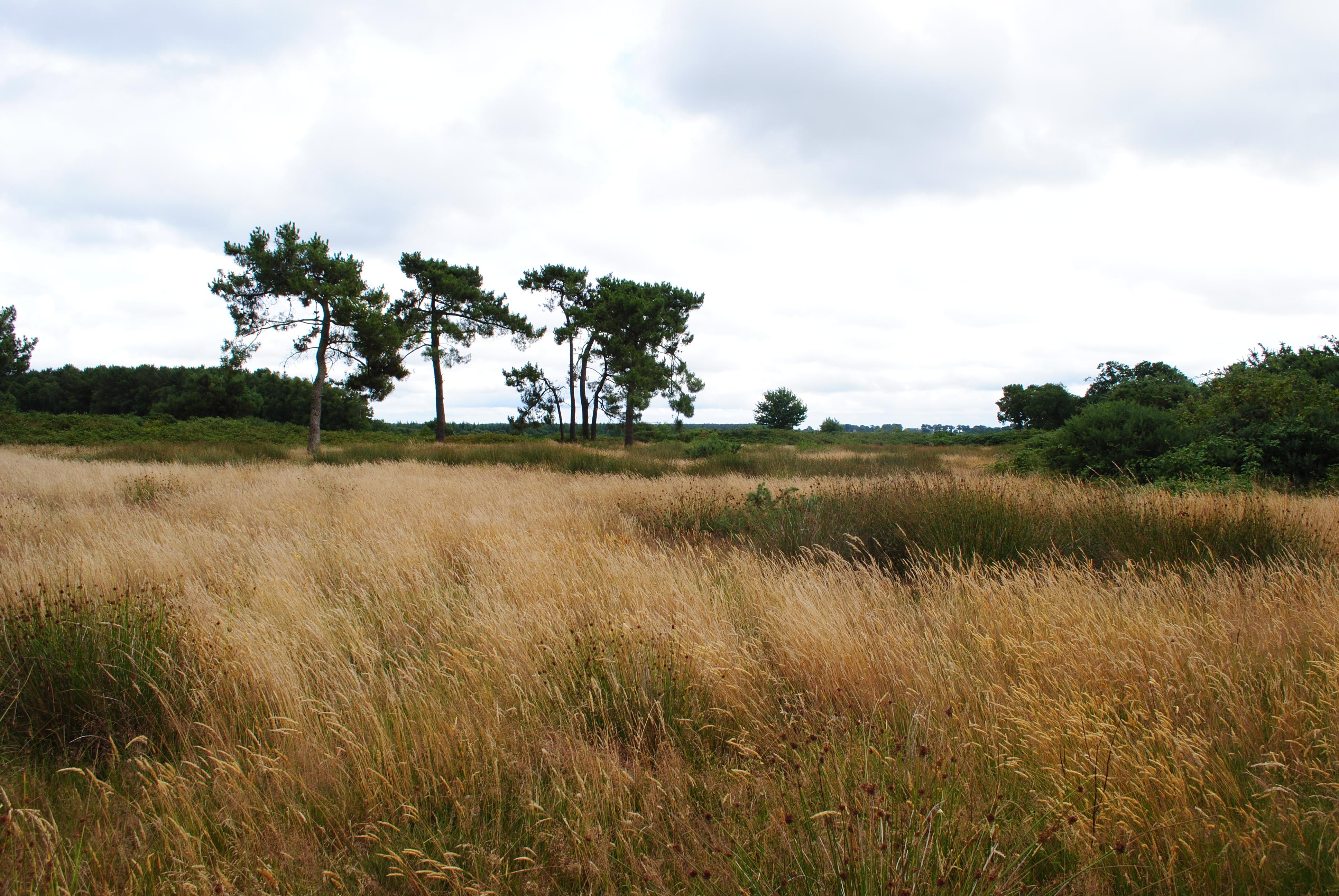 Inventaire et mise à jour des Milieux Naturels d'intérêt Ecologique (MNIE) du Pays de Rennes (35)