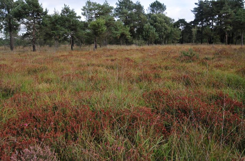 Deux types de démarche pour connaître la biodiversité d'un territoire
