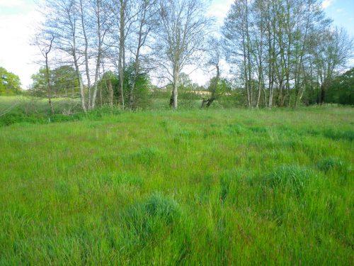 Inventaires des zones humides et des haies Communautés de Communes du canton de Saint Fulgent et du Pays des Herbiers (85)
