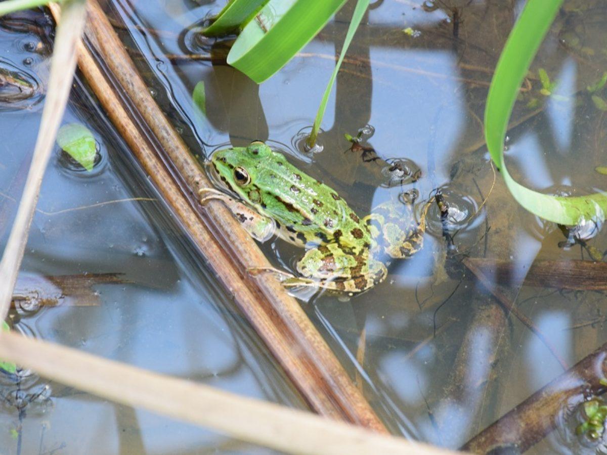 Le classement en zones humides peut empêcher leur destruction