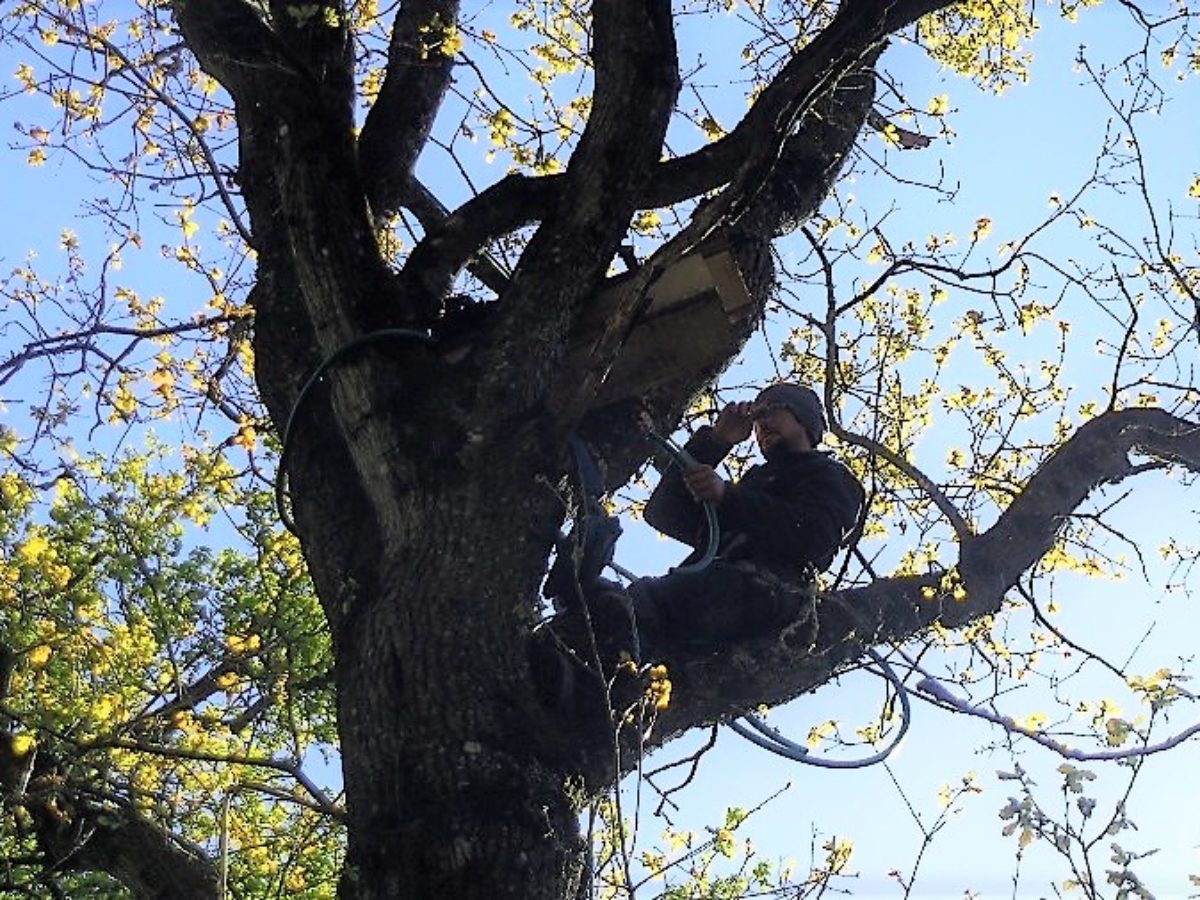 Elagueur-grimpeur, un métier de haute volée au service du génie écologique