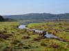 Comment gérer la prolifération d'une espèce invasive, la Crassule de Helms, sur le lac du Gast?
