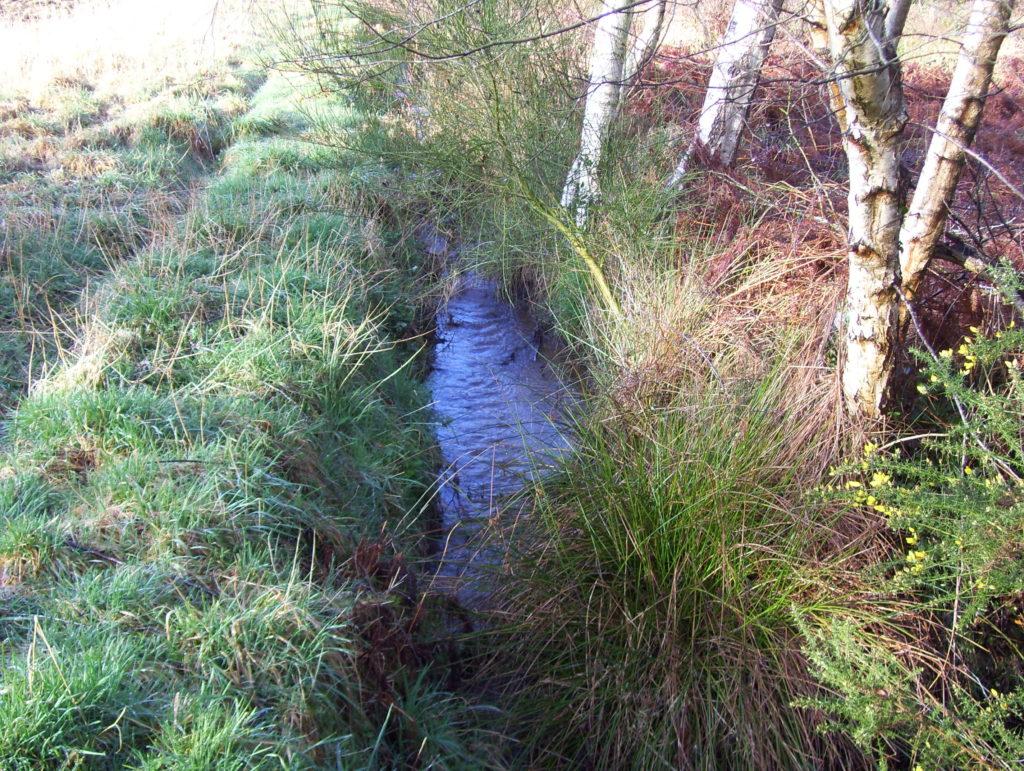 Zone humide : cours d'eau