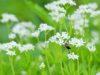 Dervenn Entreprise à mission : rendre compatible les activités humaines et la préservation de la biodiversité