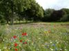 L'écologie du gazon et des pelouses fleuries